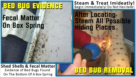 Kill Bed Bugs Instantly - BUG ZAPPER - Dry Vapor Steam Cleaner